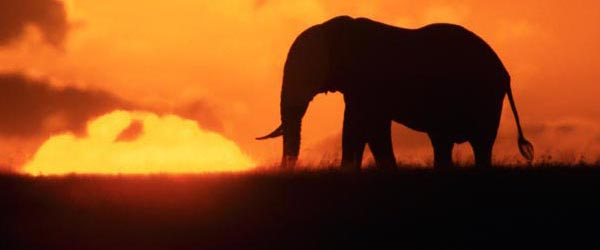 The Serengeti is one of the most diverse bio-regions on the planet and it's located in Africa.