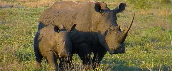 Two rhino residents of the game reserve.