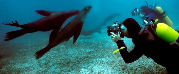 Scuba divers in the Galapagos Islands experiencing a close encounter with a group of sea lions.