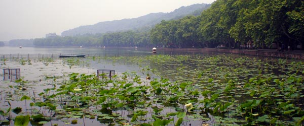 The lily pads in the lake are one of the famed ten scenes of West Lake.