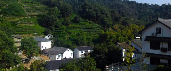 The hillside fields where China's most famous tea, Longjing, is grown.
