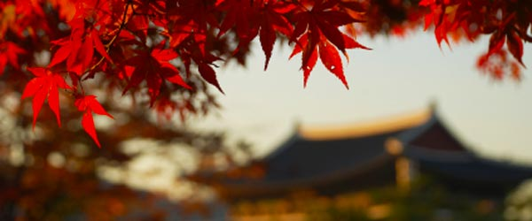 Autumn colors with Gyeongbok Palace in the background.