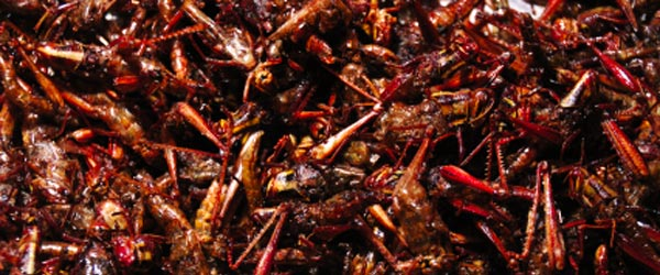 Grasshoppers for sale in Bangkok. Disgusting or delicious delicacy?