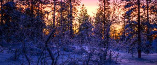 A sunset in the cold forest of Lapland in northern Finland. Photo credit Antti T. Nissinen.