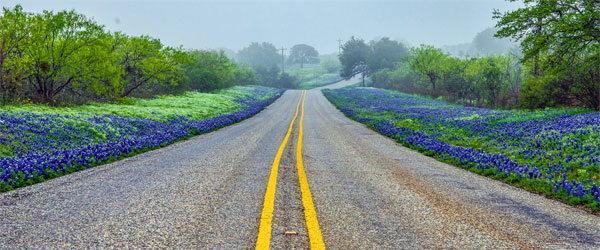 Texas bluebonnets and other wild flowers are abundant in the Hill Country spring. Photo credit Jeffrey W. Spencer.