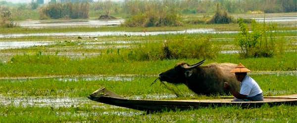 A villager on Inle Lake with his water buffalo. Photo credit Marina & Enrique.