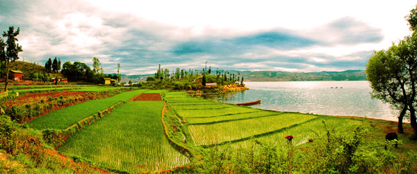 Rice fields next to a lake just outside of Kunming in southern China. CC SA