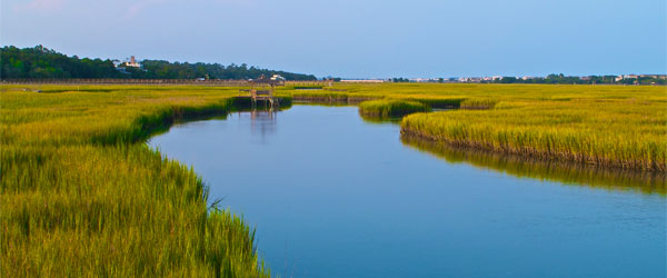 Much of Pawleys Island is comprised of a marshy estuary.