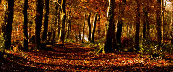 The heavily forested Cotswold Way trail in the fall.
