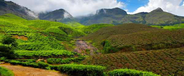 The impossibly green agricultural fields of Kerala offer plenty of opportunities for serene exploration.