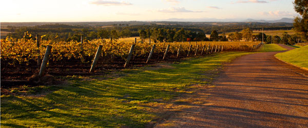 The beautiful scenery of the Hunter Valley wine country at sunset.