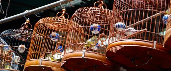 Some birds and teak bird cages at the Yuen Po Bird Garden.
