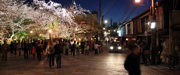 Visitors enjoying the cherry blossoms in Gion.