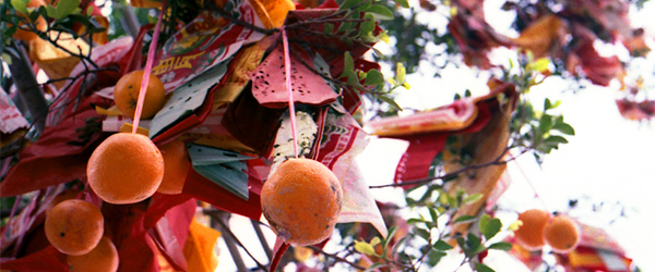 Wishes tied to oranges on the Lam Tsuen Wishing Tree.